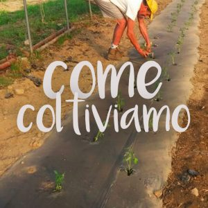Come coltiviamo - Agricobi Cobi-farm