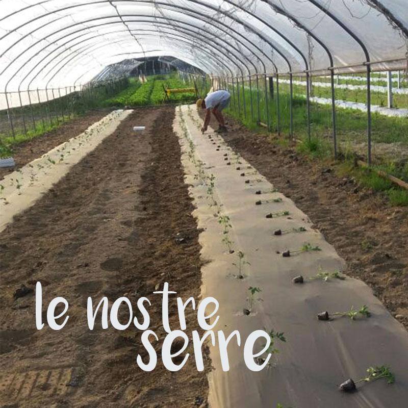 Le serre dell'azienda agricola Erik Besso